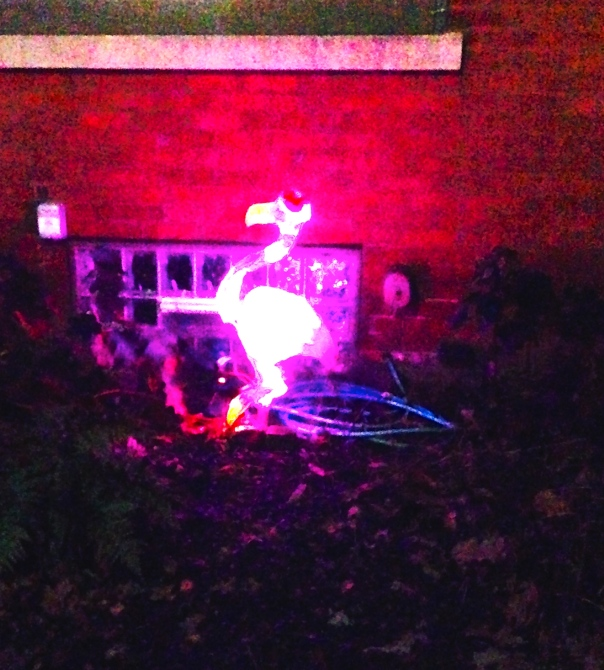 Yes, I saw a flamingo in lights...